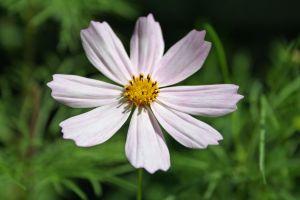1069954_flower_power